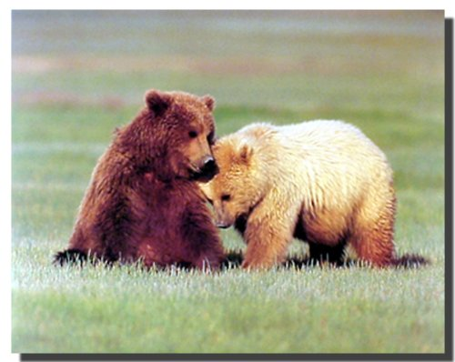 Nuzzling Grizzly Bears Wild Animal Wall Decor Art Print Poster