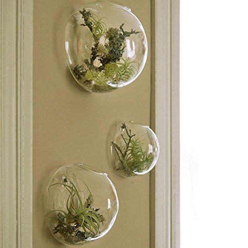 Amazon Set Of 3 Wall Bubble Terrariums Indoor Plants Holders