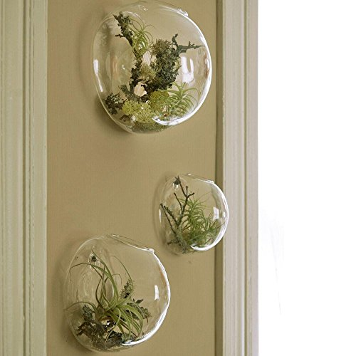 Set of 3 Wall Bubble Terrariums Indoor Plants Holders Wall Glass Vase for Flowers Wall Mounted Planters for Succulents Air Plants Wall Decoration for Sunroom Living Room (Glass Decor Wall)