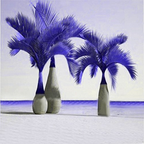 (Laliva 20 Pcs Exotic Bottle Palm Seeds Bonsai Tropical Ornamental Tree Plant Seeds Garden Planting - (Color: Purple))