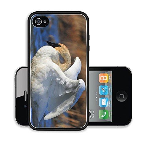 iPhone 4 4S Case Trumpeter Swan Seedskadee NWR Image 16794305439