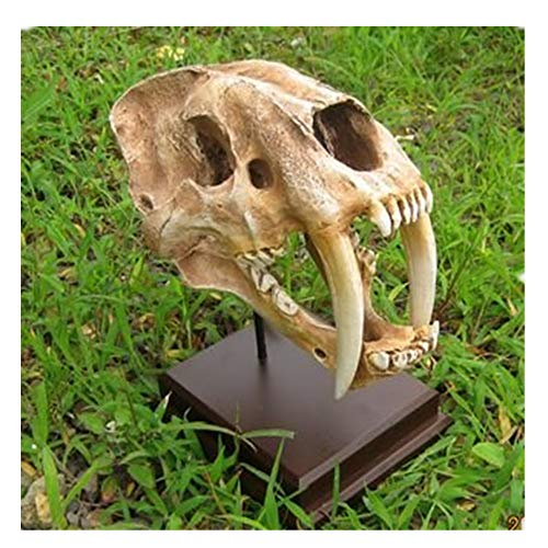 (DLLL Resin 1: 1 high Simulation Americas Saber-Toothed Tiger Skull Model/Smilodon Saber Tooth Sabertooth Tiger 1:1 Skull Replica Prop Decor Craft Collectible Museum Quality (Color 1))