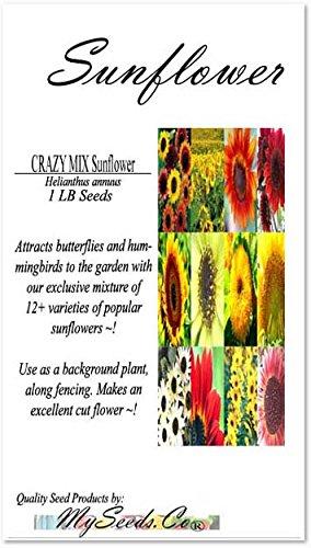 1LB (6,500+ Seeds) SUNFLOWER Sunny Sun Flower CRAZY MIX Sunflower Seeds - Non-GMO Seeds By MySeeds.Co (1 LB Sunflower Crazy Mix)