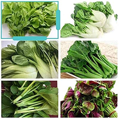 3000+ 8G Asian Summer Greens (CDK) Seeds Mix Blend: KaiLaan, Yu Choi, Green+Red Amaranth, Canton+Shanghai Pak Choi, : Garden & Outdoor