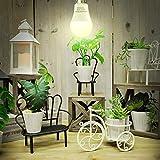 4 Pack LED Grow Light Bulb A19 Bulb, Full Spectrum