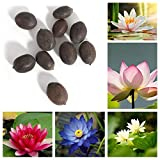 Trenton 10Pcs Water Lotus Flower Plant Bowl Pond Bonsai Seeds for Home Garden Yard Decor (Mixed Color)