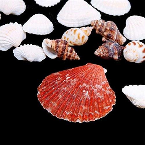 YOSEMITE Beach Sea Shells Mixed Natural SeaShells Craft Wedding Garden Aquarium Decoration,100g Mixed Color and Pattern