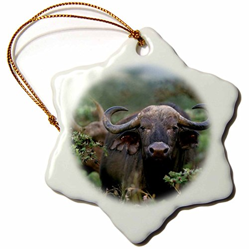 3dRose Danita Delimont - Buffalo - Front view of an African buffalo, Syncerus caffer, Kenya, Africa - 3 inch Snowflake Porcelain Ornament (orn_256919_1) by 3dRose