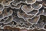 Root mushroom Farm- 30 Kinds of Mushroom Liquid