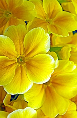 Flower Power Journal - 4
