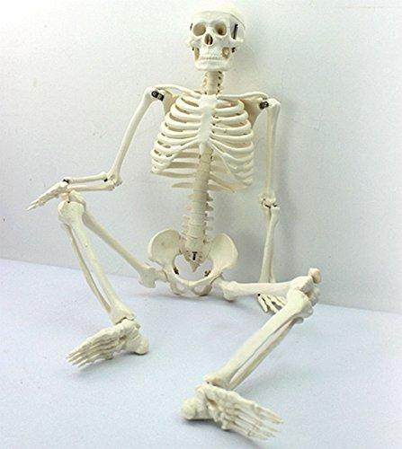 Tiptiper 45CM 인간 해부학적 해부학적 해부학 해골 의료 교육 모델 수집품 / Tiptiper 45CM 인간 해부학적 해부학적 해부학 해골 의료 교육 모델 수집품