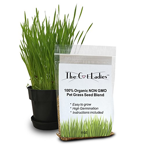 100% Organic Cat Grass Seed (Non GMO) (Best Reptiles To Own)