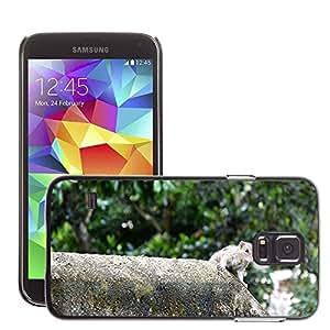 Etui Housse Coque de Protection Cover Rigide pour // M00133273 Ardilla animales mamíferos Eat Wild // Samsung Galaxy S5 S V SV i9600 (Not Fits S5 ACTIVE)