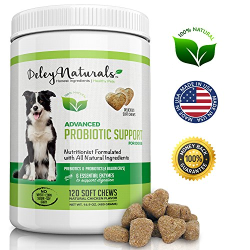 Best Probiotics for Dogs, 6 Digestive Enzymes, 4 Billion CFU's, Improves Dog Allergies, Bad Dog Breath, Dog Diarrhea, Constipation, Gas, Yeast Infection, 100% Natural Supplement, 120 Soft Chews (Dog Has Bad Breath)
