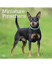 Miniature Pinschers 2020 Calendar