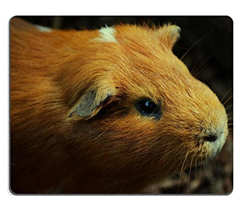 guinea-pig-young-animal-pet-nager-rodent-brown-hay-qzone-customized-made-to-order-cloth-with-neopren