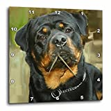 3dRose dpp_4341_1 Rottweiler Portrait Wall Clock, 10 by 10-Inch For Sale