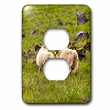 3dRose Danita Delimont - Sheep - Iceland, Icelandic sheep are commonly seen in the green pastures. - Light Switch Covers - 2 plug outlet cover (lsp_277493_6)