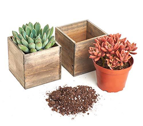 - Shop Succulents | Radiant Rosette Live Plants in Rustic Wooden Boxes, 4