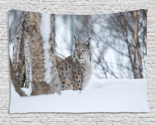 asddcdfdd Animal Tapestry, European Lynx Snowy Cold Forest Norway Nordic Country Wildlife Apex Predator, Wall Hanging for Bedroom Living Room Dorm, 80 W X 60 L Inches, Light Brown White by asddcdfdd