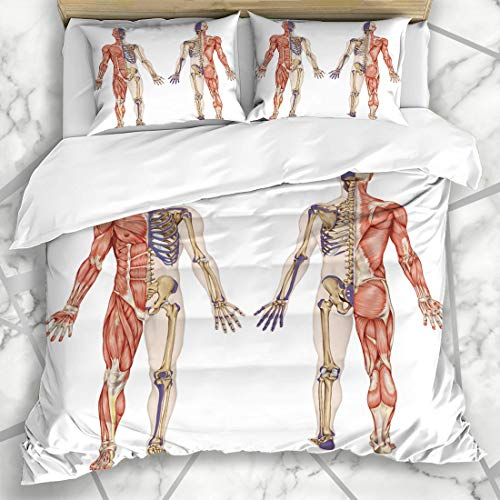 Ahawoso Duvet Cover Sets Queen/Full 90x90 Bony System Anatomical Body Human Skeleton Anatomy Didactic Skeletal Science Hip Leg Model Acromion Microfiber Bedding with 2 Pillow Shams