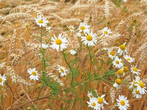Camomile Blossom - Lais Jigsaw Camomile Blossom 2000 Pieces