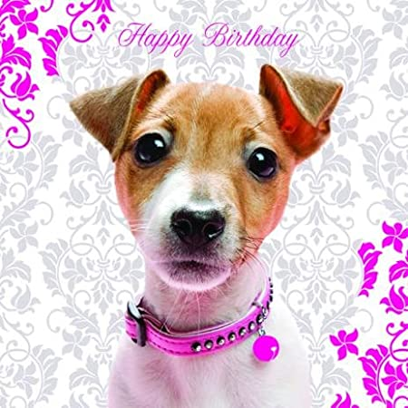 Pretty In Pink Jack Russell Birthday Card Amazon Kitchen Home