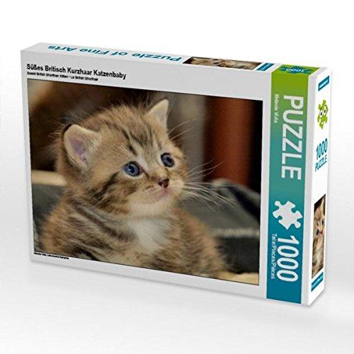 Süßes Britisch Kurzhaar Katzenbaby 1000 1000 Katzenbaby Teile Puzzle Quer 0b63dd