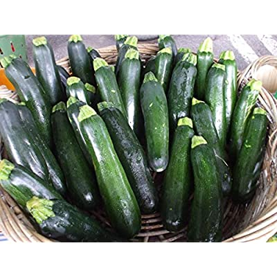 Squash, Summer, Raven Dark Green Zucchini, Organic, Highly Productive ! (sm Packet 10 Seeds) by AchmadAnam : Garden & Outdoor