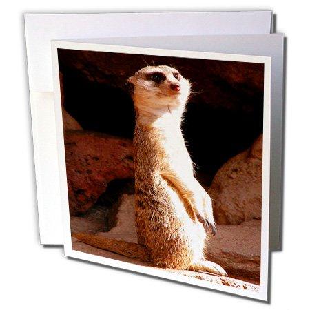 Meerkat Birthday Card Top 10 Results