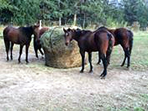 Round Bale Slow Feed Hay Net 6x6 1 3/4 Hole