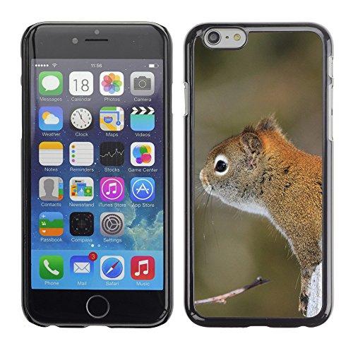 """Premio Sottile Slim Cassa Custodia Case Cover Shell // V00003871 écureuil 3 // Apple iPhone 6 6S 6G PLUS 5.5"""""""