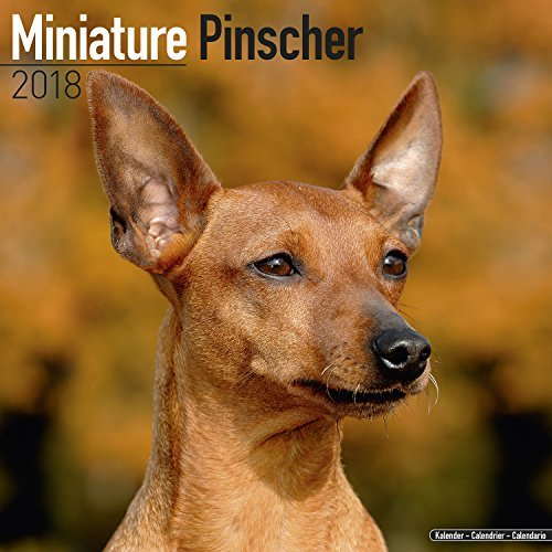 Pinscher Miniature (Miniature Pinscher Calendar 2018 - Dog Breed Calendar - Premium Wall Calendar 2017-2018)