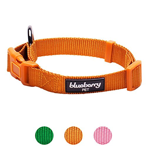 Blueberry Pet 6 Colors Better Basic Dog Collar, Orange Fusion, X-Small, Neck 7.5