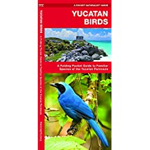 Yucatan Birds: A Folding Pocket Guide to Familiar Species of the Yucatan Peninsula