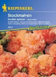 Stockrose Chaters Double Apricot