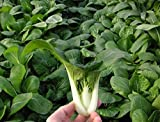 Chinese Cabbage, Pak Choi Is a Non-heading Leaf Type Organic Vegetable.2000 Seeds