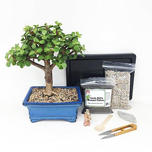 Dwarf Jade Bonsai Tree Beginner Kit Includes Potted Tree, Japanese Humidity Tray, River Rocks, Organic Bonsai Food, Mini Clippers, Rock, Fertilizer Spoon, Mudman Figurine