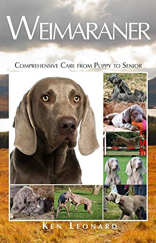 Weimaraner: Comprehensive Care from Puppy to Senior