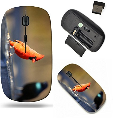 Liili Wireless Mouse Travel 2.4G Wireless Mice with USB Receiver, Click with 1000 DPI for notebook, pc, laptop, computer, mac book One Cardinal and one Common Grackle birds Photo 20655150