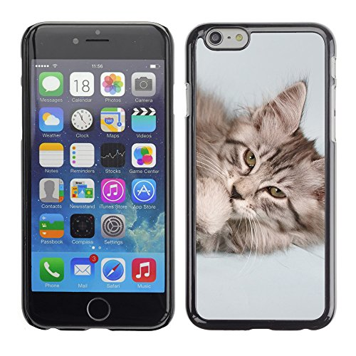 "Premio Sottile Slim Cassa Custodia Case Cover Shell // V00003496 chaton lécher sa patte // Apple iPhone 6 6S 6G 4.7"""