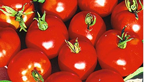 Heirloom Lycopersicum Plentiful Producer Dependable product image