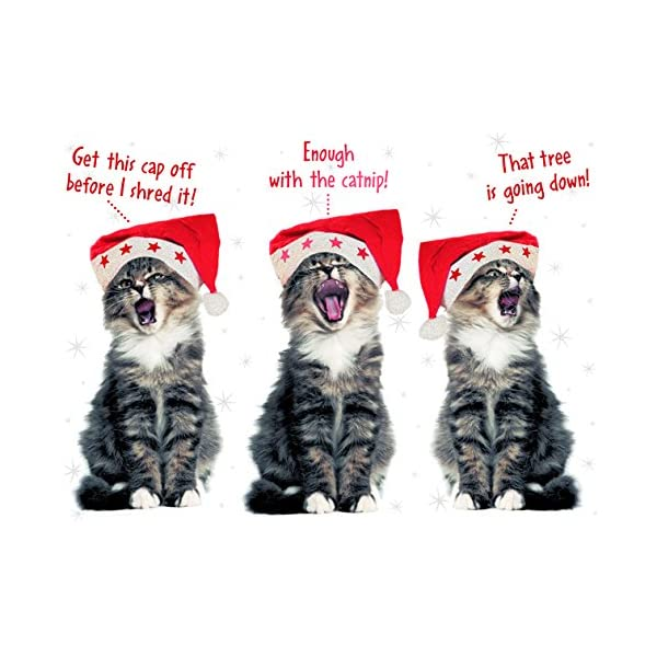 Singing cats with hats boxed holiday greeting cards embellished with amazon prime m4hsunfo