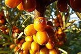 Home Comforts LAMINATED POSTER Fruits Selenium ÅeÅ¡etlákový Macro Bush Poster 24x16 Adhesive Decal