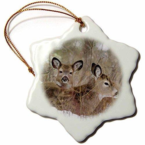 Christmas Ornament Danita Delimont - Deer - Mule deer resting in cover in Whitefish Montana - US CHA - Chuck Haney - Snowflake Porcelain Ornament