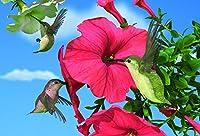 Gift Trenz Hummingbirds Motion Postcard (20313)