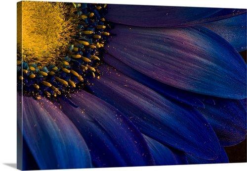 "greatBIGcanvas Blue Rays by Azorsteinn H. Ingibergsson Photographic Print with Black Frame, 30"" x 20"""