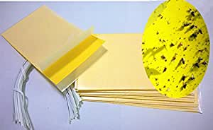 Hafer Dual Sticky Trap, Yellow, 5 X 3-Inches (15 pcs)