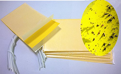 Hafer Dual Sticky Yellow 3 Inches product image