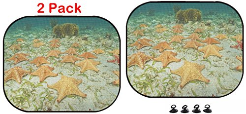 Cluster Starfish - Luxlady Car Sun Shade Protector Block Damaging UV Rays Sunlight Heat for All Vehicles, 2 Pack Image ID: 35468476 Cluster of Starfish Oreaster reticulatus Underwater on The oc
